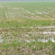 01_11 Epernon (7) rizière locale