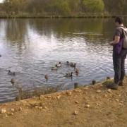 08-04-18 St Hilarion 17 - Les canards de l'étang de St Hilarion 2
