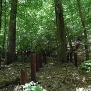 mardi 08-05 - 11 Sentiers à travers plaine et piémont