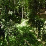mardi 08-05 - 13 Sentiers à travers plaine et piémont