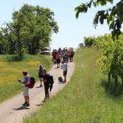mardi 08-05 - 19 Sentiers à travers plaine et piémont