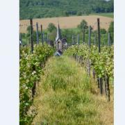 mardi 08-05 - 4 Sentiers à travers plaine et piémont