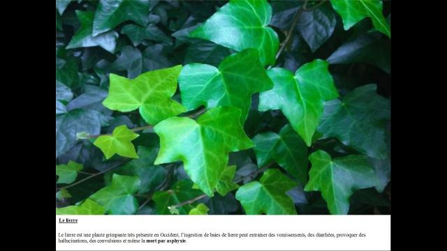 Plantes 8